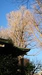 戸部杉山神社・社殿と大銀杏