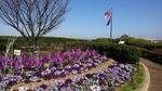 コクリコ坂国際信号旗と早春の花