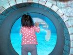 シロイルカの水槽を覗き込むNちゃん