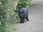 黒ネコちゃん