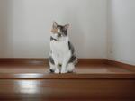 三毛猫のルミちゃん