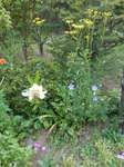 百合と秋の七草の花