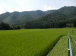緑染まる田園