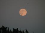 昇ったばかりの中秋の名月