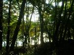 中禅寺湖の樹林